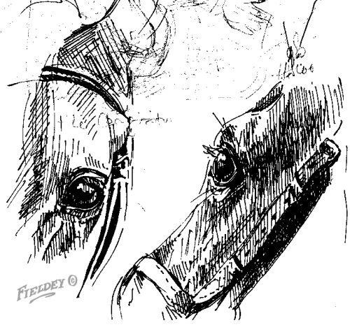 Polo Ponies head sketch detail London