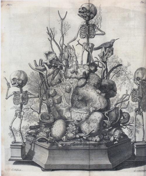vintage anatomy etching