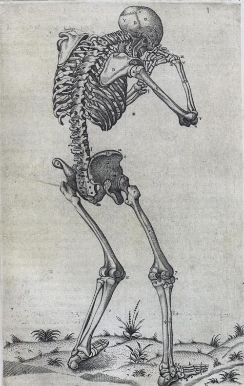 crying anatomy skeleton