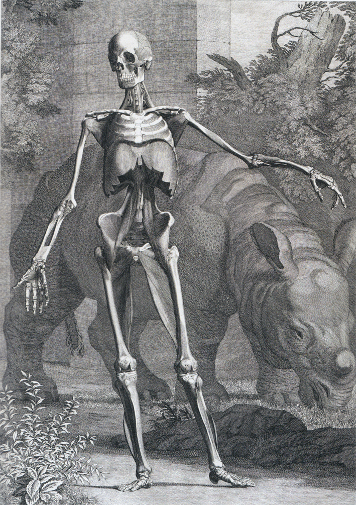 Inspirational Friday Beautiful Death Renaissance Anatomy Etchings