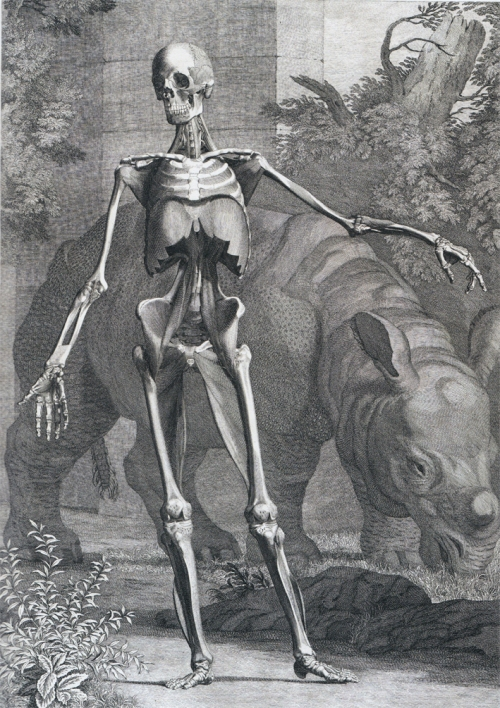 Skeleton and rhinocerous