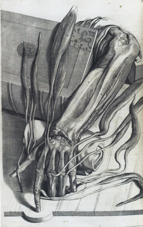 Anatomy arm